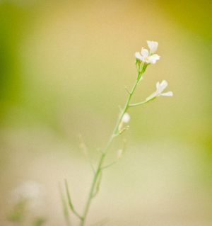 floralSeries (1 of 1)-8.jpg